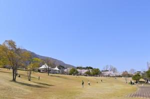 yoro_park_sakura-37
